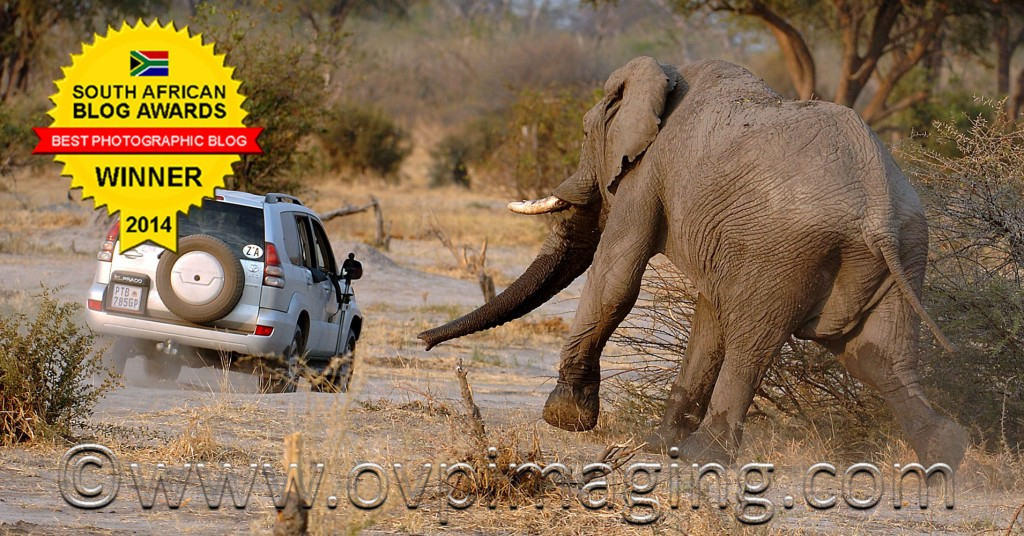 Elephant Chasing Car
