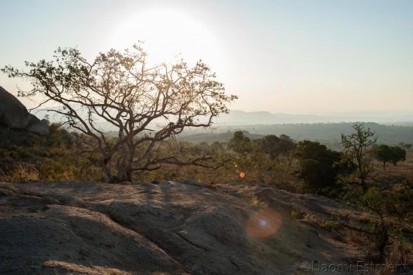 Kruger National Park View